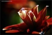m3_932693_blume_fb.jpg
