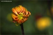 m3_933005_knospe_fb.jpg