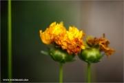 m3_933488_herbst_fb.jpg