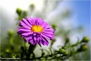 m3_933502_blume_fb.jpg