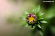 m3_933508_knospe_fb.jpg