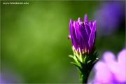 m3_933519_lila_fb.jpg