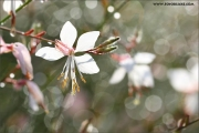 m3_934389_blume_fb.jpg