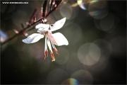 m3_934434_blume_fb.jpg