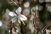 m3_934436_blume_fb.jpg