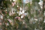 m3_934438_blume_fb.jpg