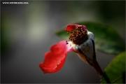 m3_934588_rose_fb.jpg