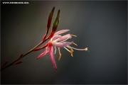 m3_934629_gaura_fb.jpg