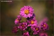 m3_935725_blume_fb.jpg