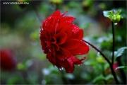 m3_936667_blume_fb.jpg