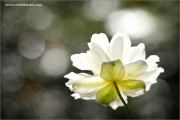 m3_937266_blume_fb.jpg
