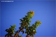 m3_939191_unkraut_fb.jpg