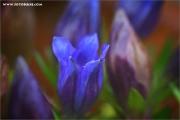 m3_939449_blume_fb.jpg