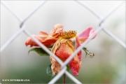 m3_939458_rose_fb.jpg