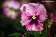 m3_939709_blume_fb.jpg