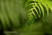 m5_178157_farn_fb