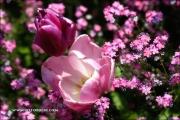 m5_178600_tulpen_fb