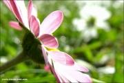 p10_110170_blume_fb.jpg