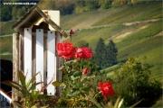 p10_110525_rose_fb.jpg