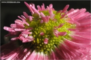 ps640_814844_blume_fb.jpg
