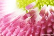ps640_814887_blume_fb.jpg