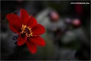 3m_825420_blume_fb.jpg