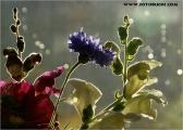 c20_539565_blumen_fb.jpg