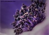 c20_633112_anemone_fb.jpg
