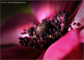 c20_633122_anemone_fb.jpg