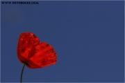 c20_650792_mohn_fb.jpg