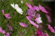 c21_614337_blumen_fb.jpg