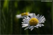 c21_721781_blume_fb.jpg