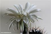 c21_725938_kaktus_fb.jpg