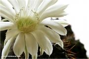 c21_726003_kaktus_fb.jpg