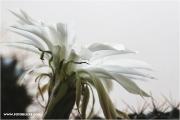 c21_726024_kaktus_fb.jpg