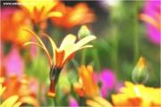 c21_730185_traum_fb.jpg