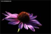 c21_733535_blume_fc.jpg