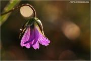 c21_740088_blume_fb.jpg