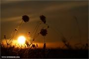 d100_148820_soa_fb.jpg