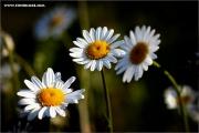 d600_110044_blumen_fb.jpg