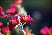 d600_110209_blume_fb.jpg