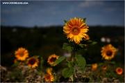 d600_123634_soblu_fb.jpg