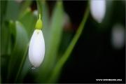 d600_136793_schneegl_fb.jpg