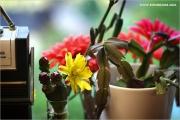 m3_100156_kaktus_fb.jpg