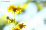 m3_104444_blume_fb.jpg