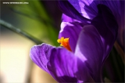 m3_104647_krokuss_fb.jpg