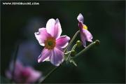 m3_105792_rosa_fb.jpg