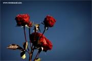 m3_108730_rosen_fb.jpg