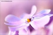 m3_109456_blume_fb.jpg