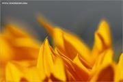 m3_111089_soblu_fb.jpg